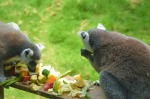 Todas las especies, nativas o exóticas, disfrutan de dietas acordes a sus necesidades.